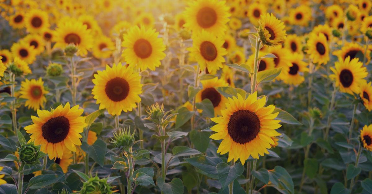 Seguro para Explotaciones de Cultivos Herbáceos Extensivos. Plan 2019
