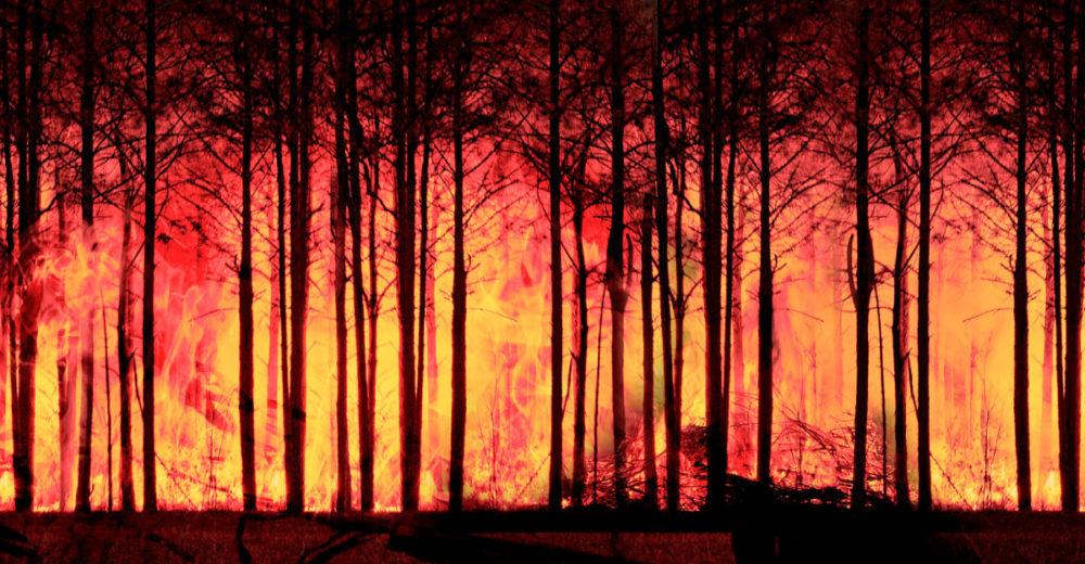 Verano y los incendios forestales