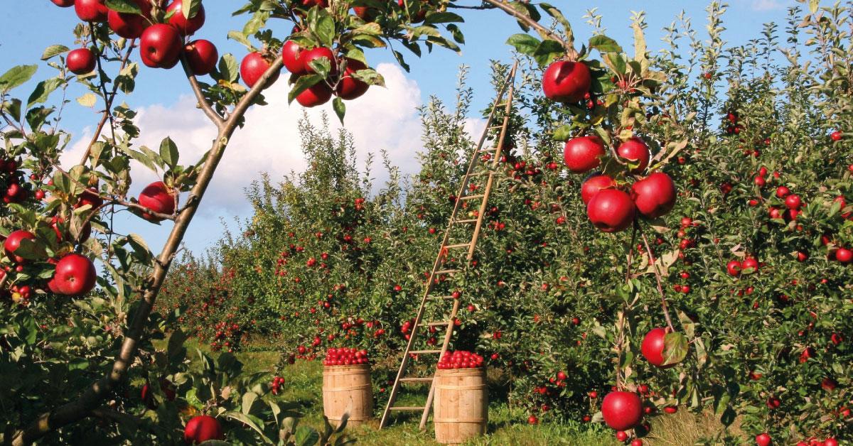 Todos los seguros agrarios para este otoño-invierno